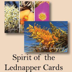 Spirit of the Lednapper