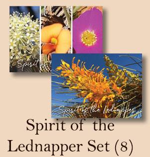 Spirit of the Lednapper 8 Card Set